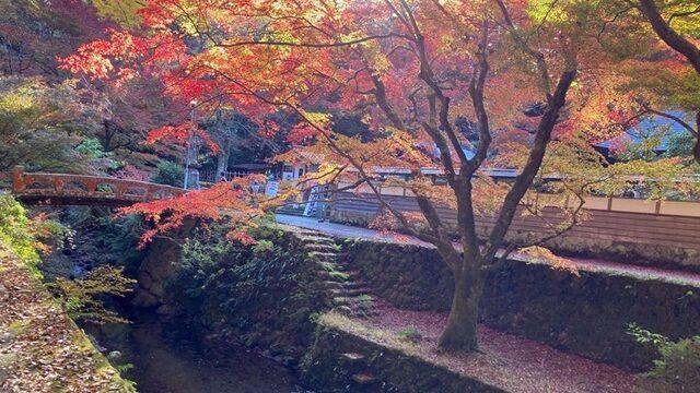 鰐淵寺-紅葉橋2020-640x428