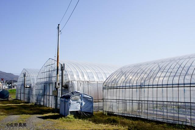 佐野農園 ハウス